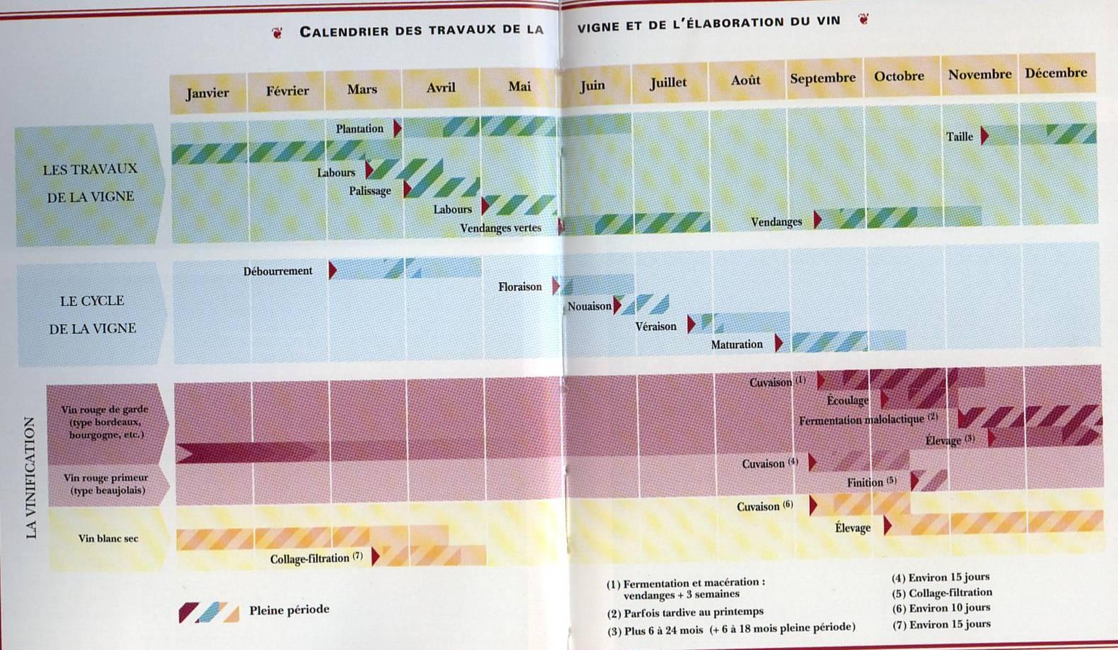 Travaux Vigne Calendrier.Cycle De La Vigne